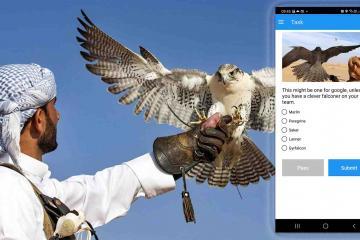 falconers in uae team building activity