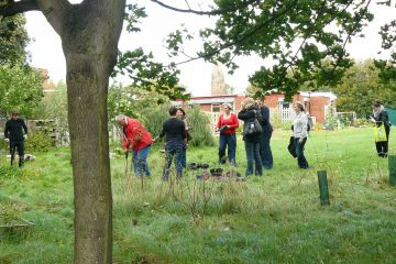 tree mend us charity team building activity